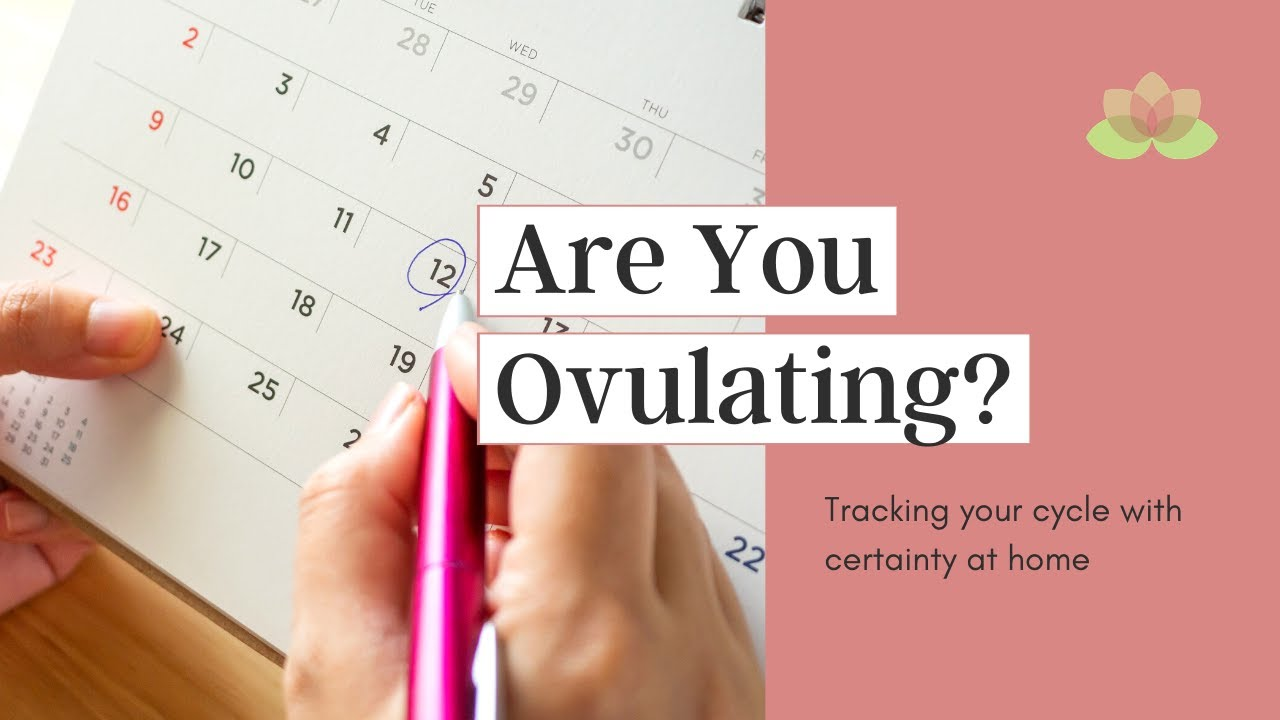 Woman tracking menstrual cycle to find out when she ovulates